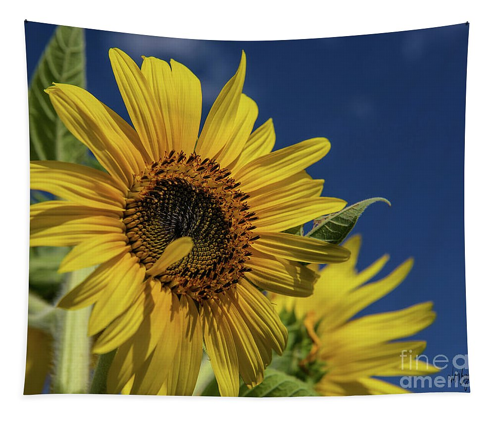 Sunflower Tapestry featuring the photograph Golden Sunflower by Lois Bryan