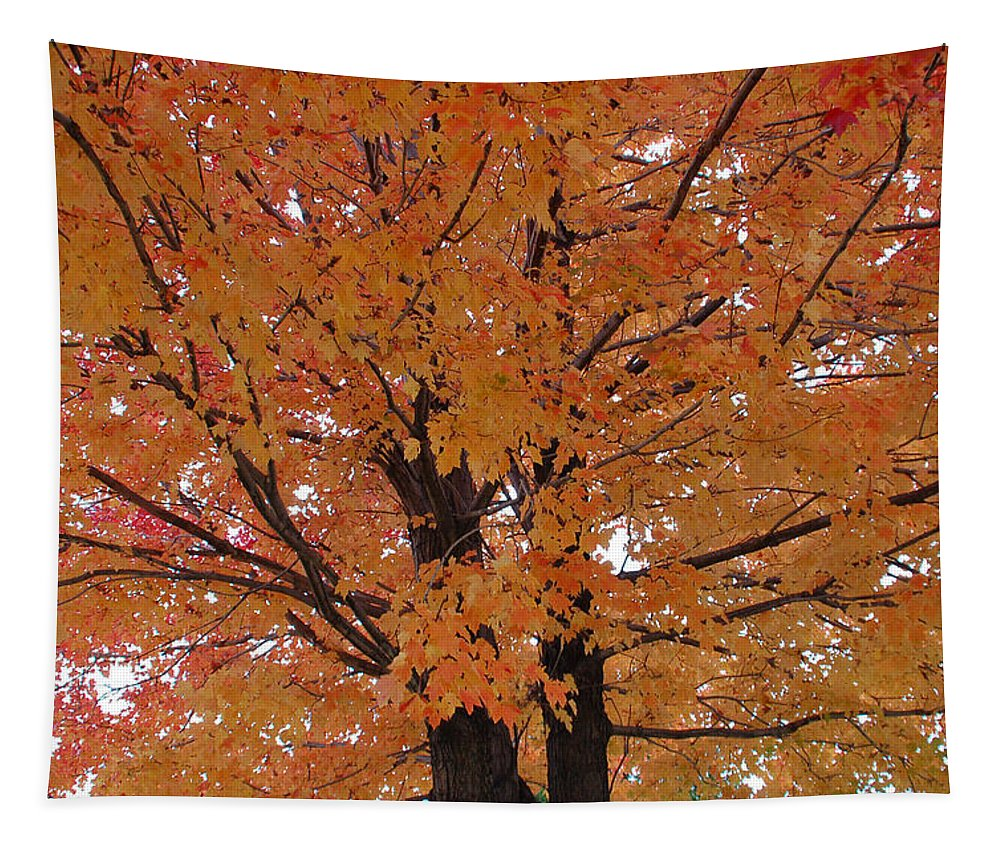 Autumn Tapestry featuring the photograph Golden Tree by Aimee L Maher ALM GALLERY