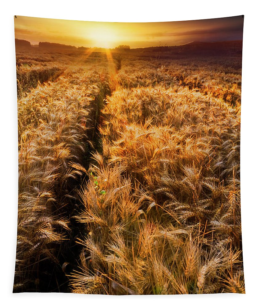 Appalachia Tapestry featuring the photograph Golden Wheat Dreamscape by Debra and Dave Vanderlaan