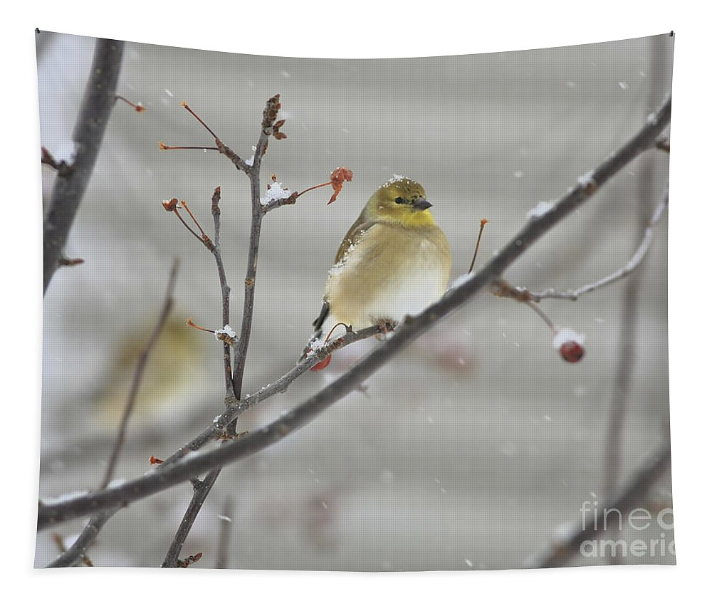 Finch Tapestry featuring the photograph Golden With Snow by Deborah Benoit