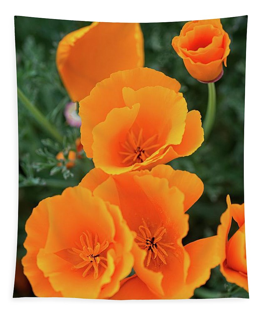 California Poppies Tapestry featuring the photograph Gorgeous Orange California Poppies by Lynn Bauer