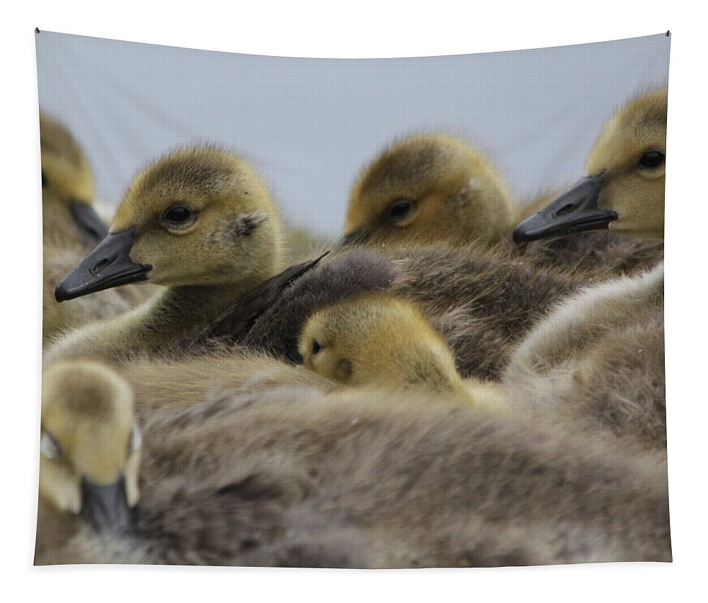 Geese Tapestry featuring the photograph Gosling Gaggle by Lauri Novak