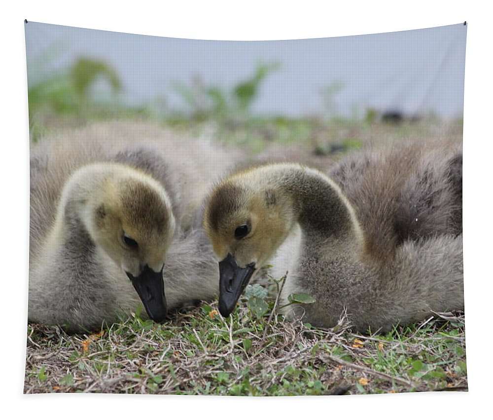 Geese Tapestry featuring the photograph Gosling Love by Lauri Novak