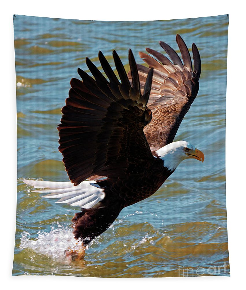 Bald Eagle Tapestry featuring the photograph Grabbing Dinner by Mike Dawson