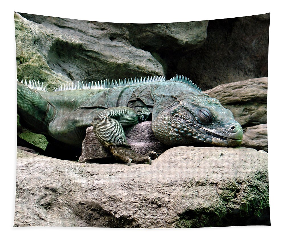 Lizard Tapestry featuring the photograph Grand Cayman Blue Iguana by Angelina Tamez