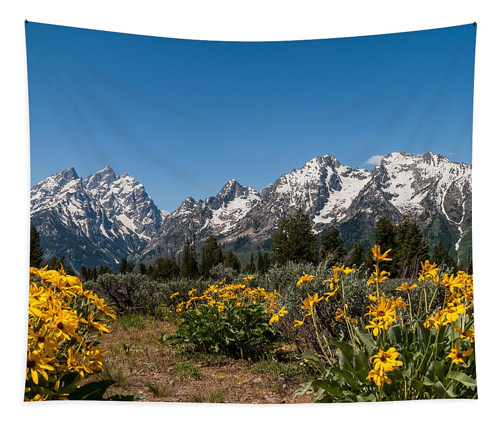 Grand Tetons Tapestry featuring the photograph Grand Teton Arrow Leaf Balsamroot by Brian Harig