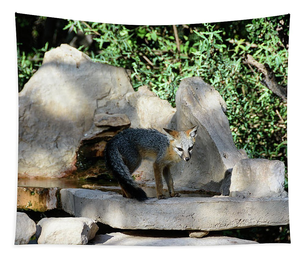 Gray Fox Tapestry featuring the photograph Gray Fox 4 by Debra Martz