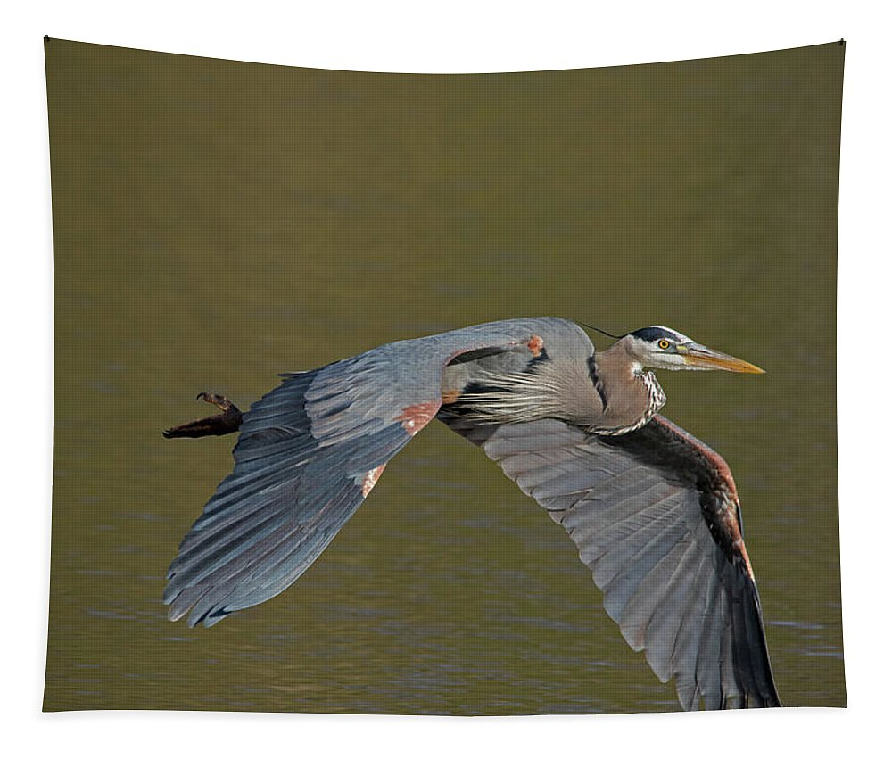 Heron Tapestry featuring the photograph Great Blue Heron In Flight by CJ Park