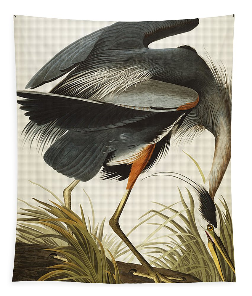 Great Blue Heron (ardea Herodias) Plate Ccxi From 'the Birds Of America' (aquatint & Engraving With Hand-colouring) By John James Audubon (1785-1851) Tapestry featuring the drawing Great Blue Heron by John James Audubon