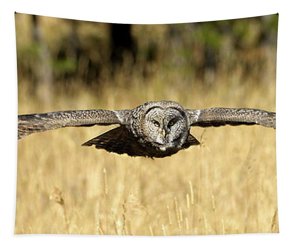 Great Gray Owl In Flight Tapestry featuring the photograph Great Gray Owl In Flight by Wildlife Fine Art