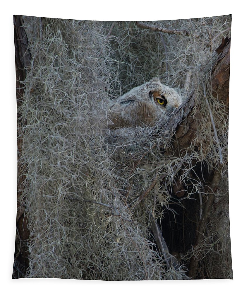 Great Horned Owl Tapestry featuring the photograph Great Horned Owl Fledgling by Mitch Spence