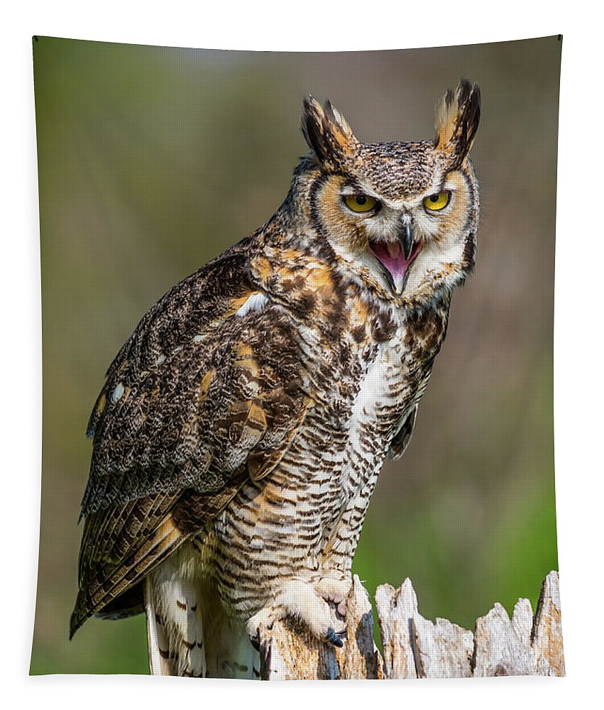 Nature Tapestry featuring the photograph Great Horned Owl Screeching by CJ Park