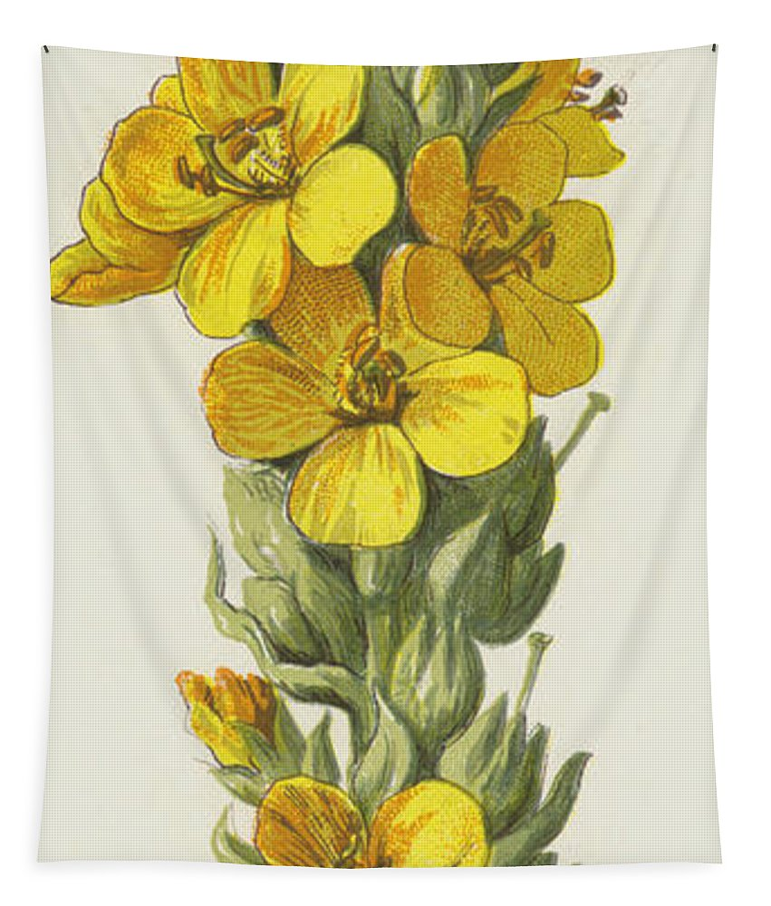 Mullein Tapestry featuring the painting Great Mullein by Frederick Edward Hulme
