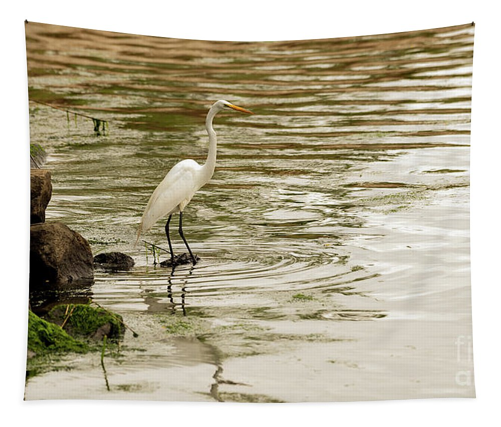 Great Egret Tapestry featuring the photograph Great White Egret by Sam Rino