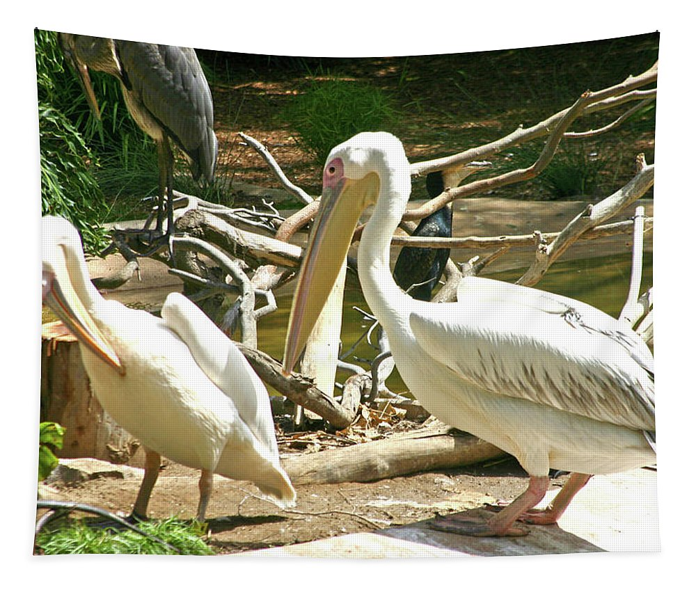 Pelican Tapestry featuring the photograph Great White Pelican by Hugh Carino
