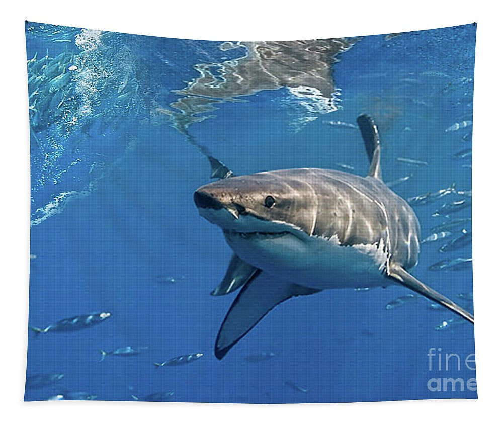 Great White Shark Tapestry featuring the mixed media Great White Shark by Thomas Pollart