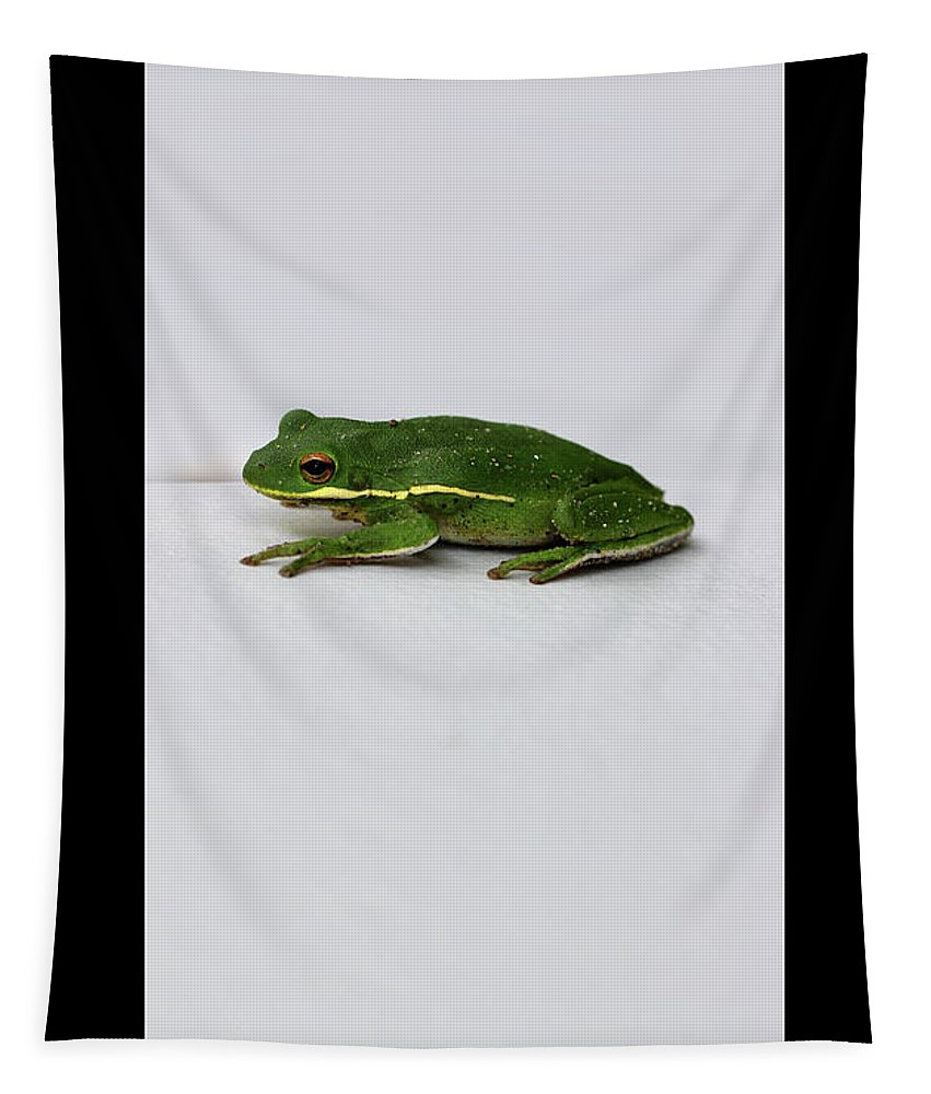 Amphibian Tapestry featuring the photograph Gree Tree Frog 2016 With Black Border by Karen Adams