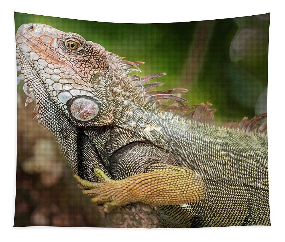 Joan Carroll Tapestry featuring the photograph Green Iguana Costa Rica by Joan Carroll