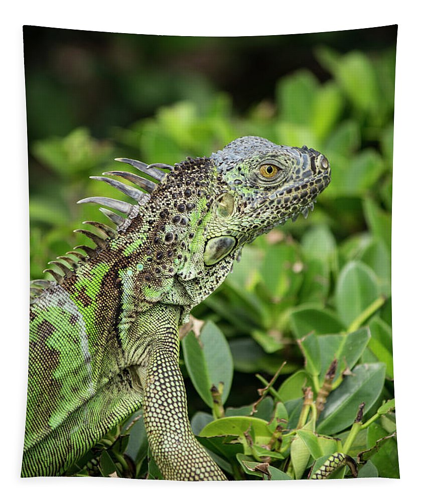 Animal Tapestry featuring the photograph Green Iguana Vertical by Teresa Wilson