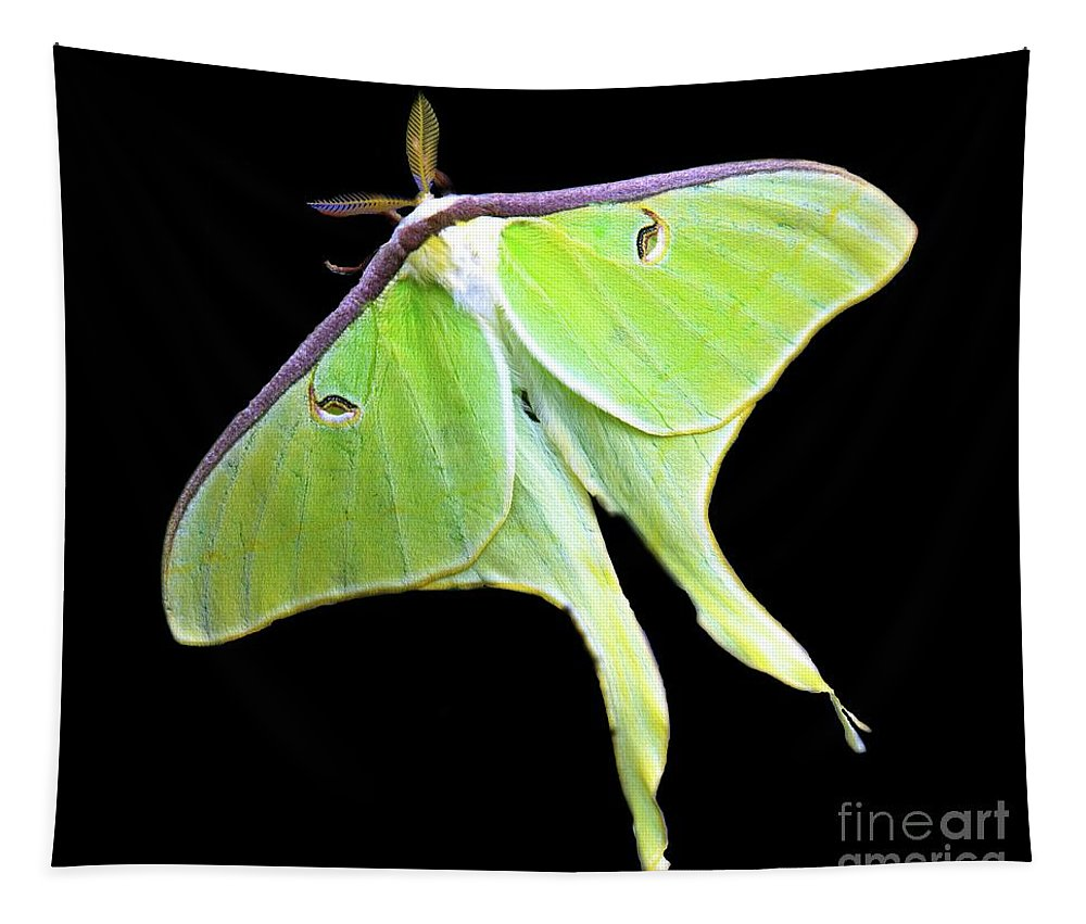Tapestry featuring the photograph Green Lantern Moth by Davids Digits