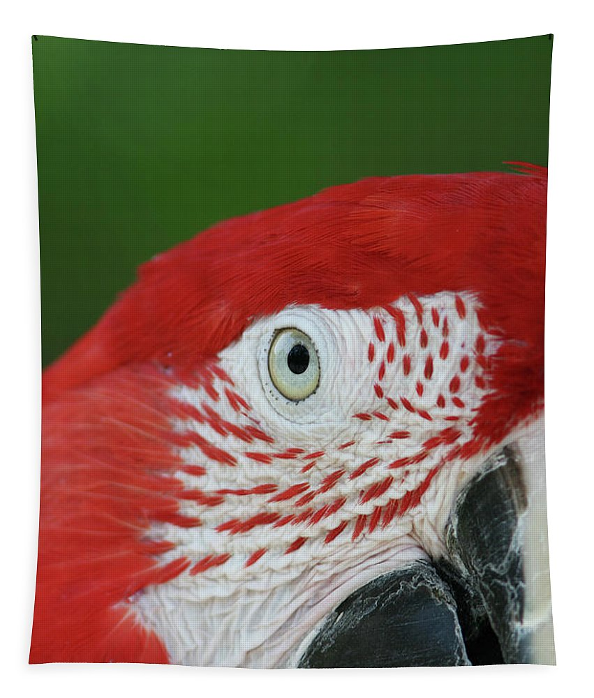 Green-winged Macaw Tapestry featuring the photograph Green-winged Macaw Close Up by Judy Whitton