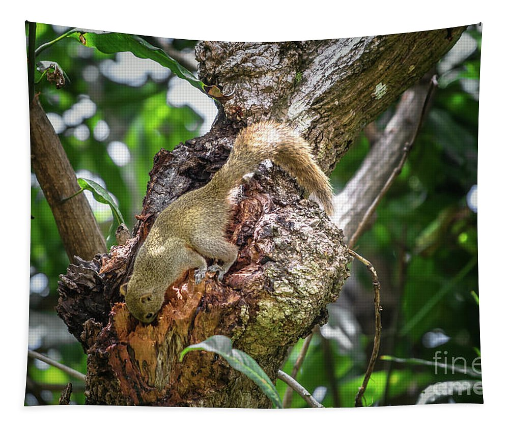 Michelle Meenawong Tapestry featuring the photograph Grey Bellied Squirrel by Michelle Meenawong