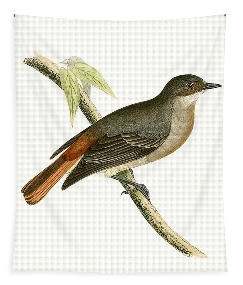 Bird Tapestry featuring the painting Grey Redstart by English School