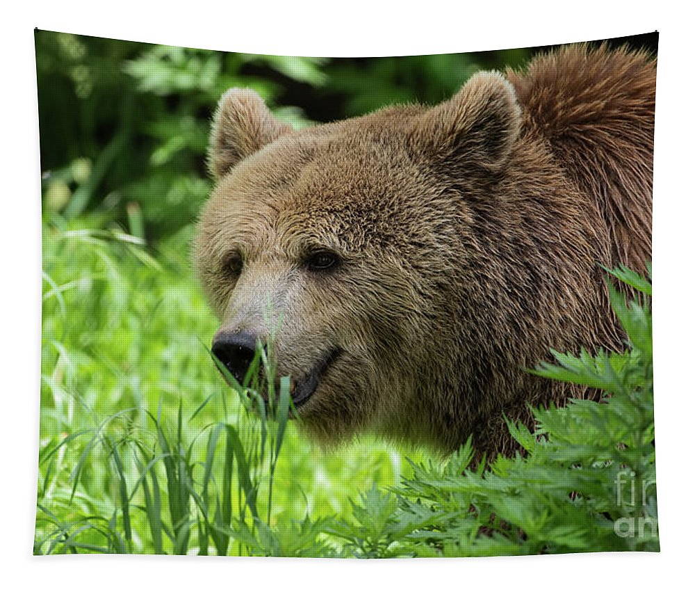 Grizzly Bear Tapestry featuring the photograph Grizzly Bear by Sam Rino