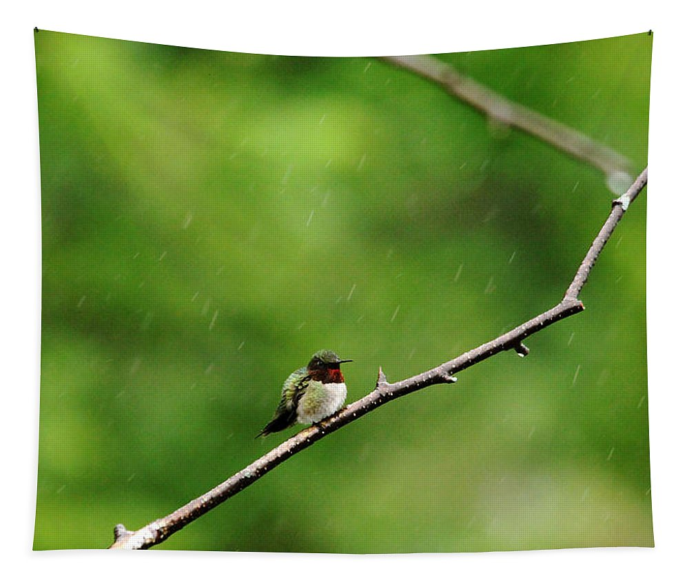 Hummingbirds Tapestry featuring the photograph Grumpy Hummer by Debbie Oppermann