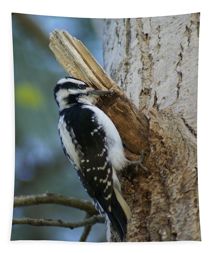 Birds Tapestry featuring the photograph Hairy Woodpecker by Ben Upham III