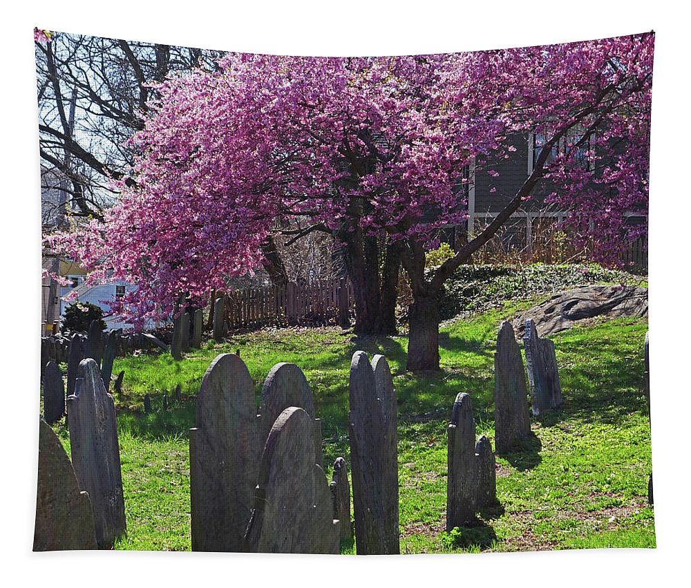 Harris Tapestry featuring the photograph Harris Street Cemetery Cherry Blossom Tree Marblehead Ma 2 by Toby McGuire