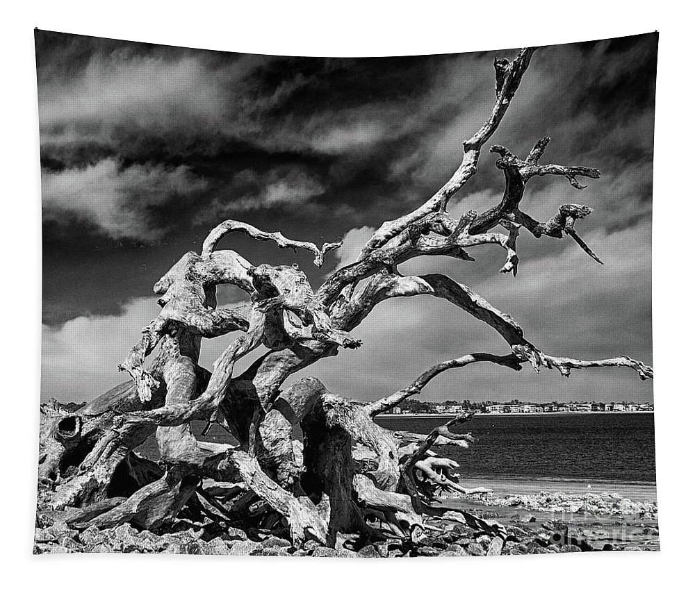 Driftwood Beach Tapestry featuring the photograph Haunting Beauty by Dawn Gari