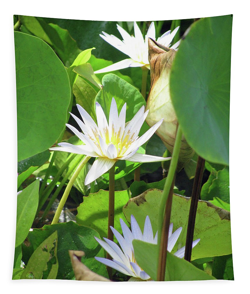 Water Lily Tapestry featuring the photograph Hawiian Water Lily 01 - Kauai, Hawaii by Pamela Critchlow