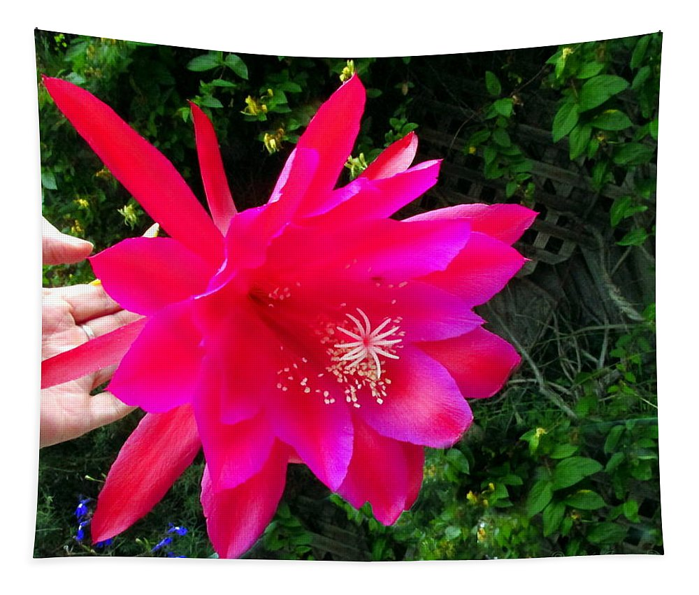 Epiphyllum-orchid-cactus Tapestry featuring the photograph Heavenly Epiphyllum Orchid Cactus by Joyce Dickens
