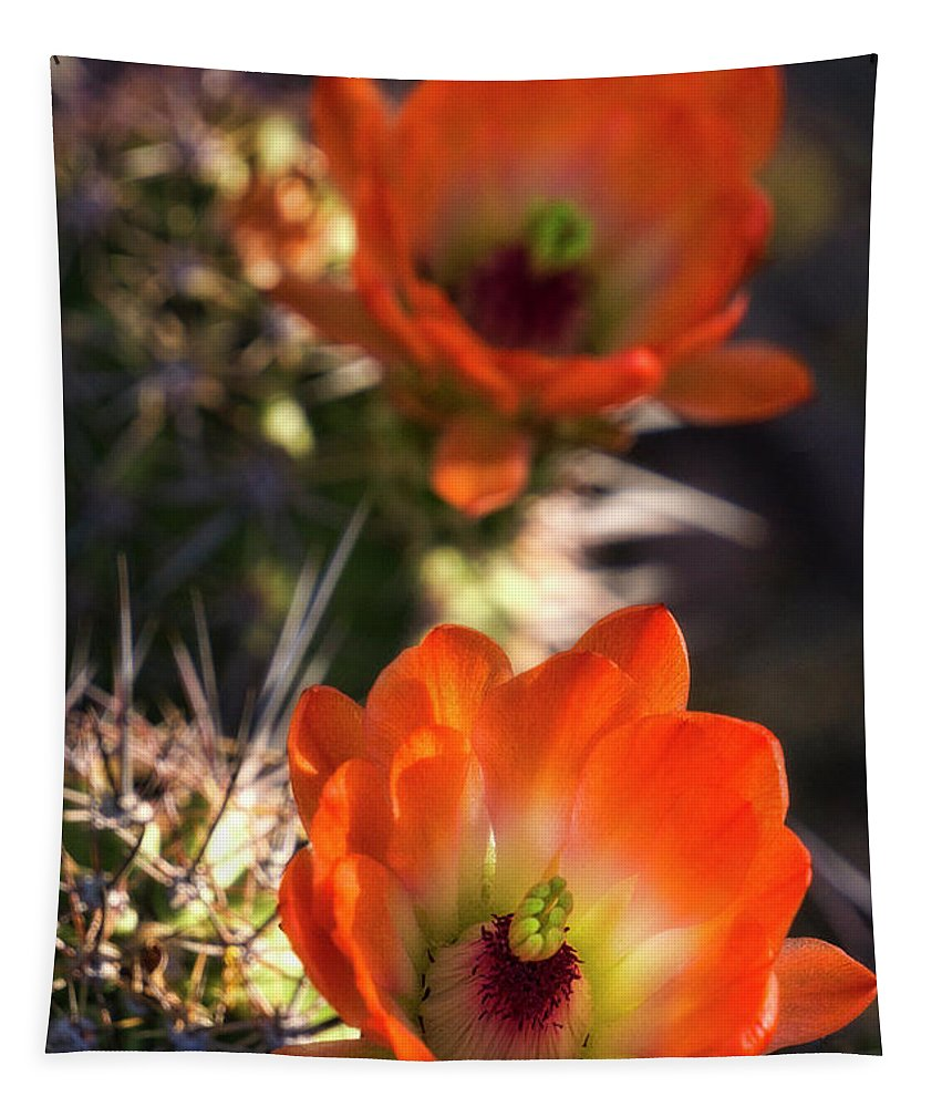 Hedgehog Cactus Tapestry featuring the photograph Hedgehog Flowers In Dawn's Early Light by Saija Lehtonen