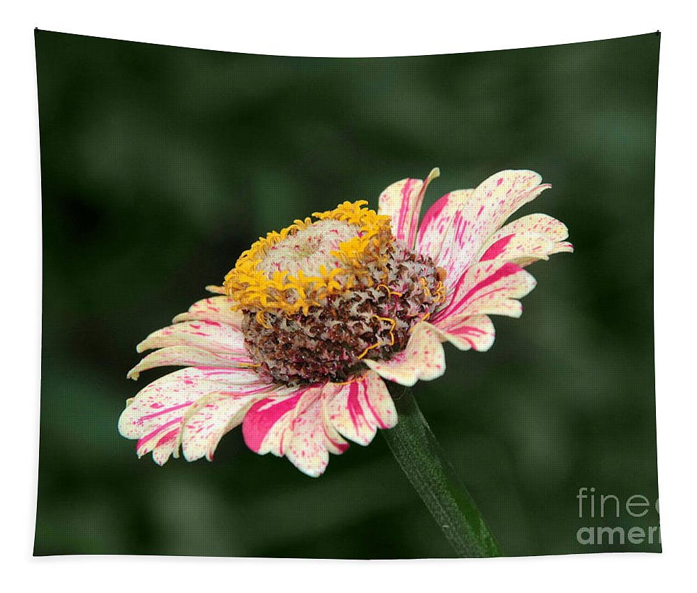 Helenium Tapestry featuring the photograph Helenium by Sergey Lukashin