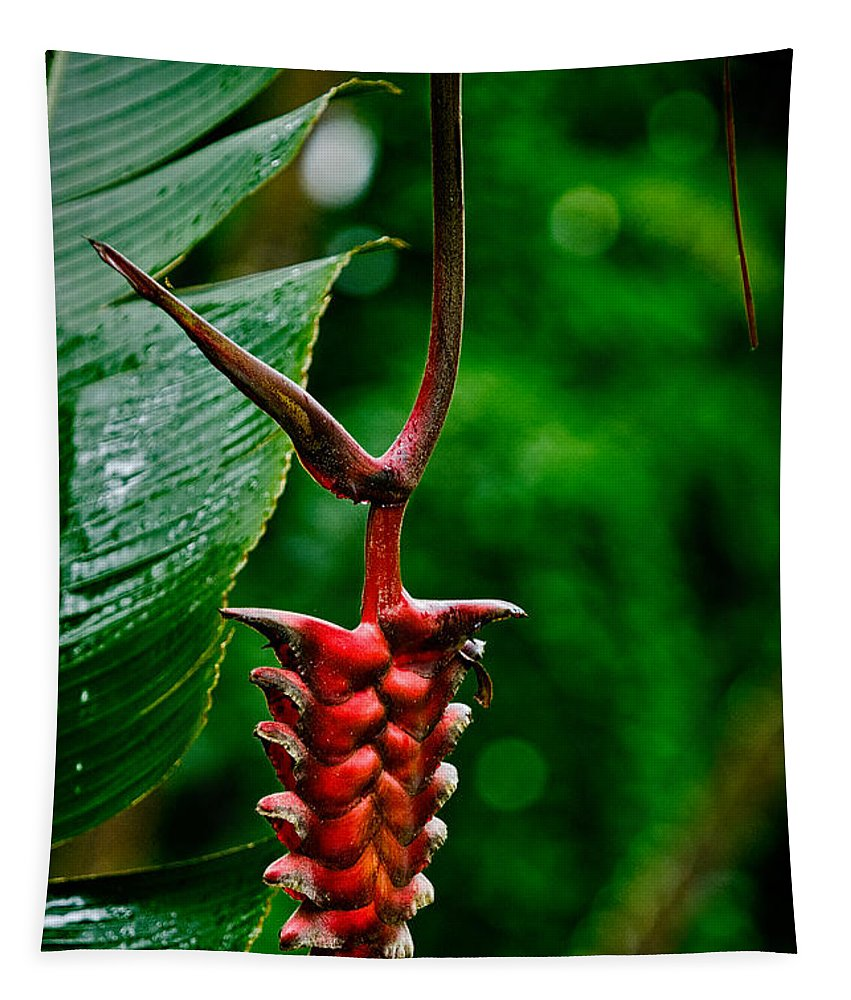 Flower Tapestry featuring the photograph Heliconia by Christopher Holmes