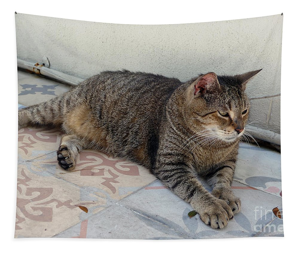 Cat Tapestry featuring the photograph Hemingway Polydactyl Cat by Catherine Sherman