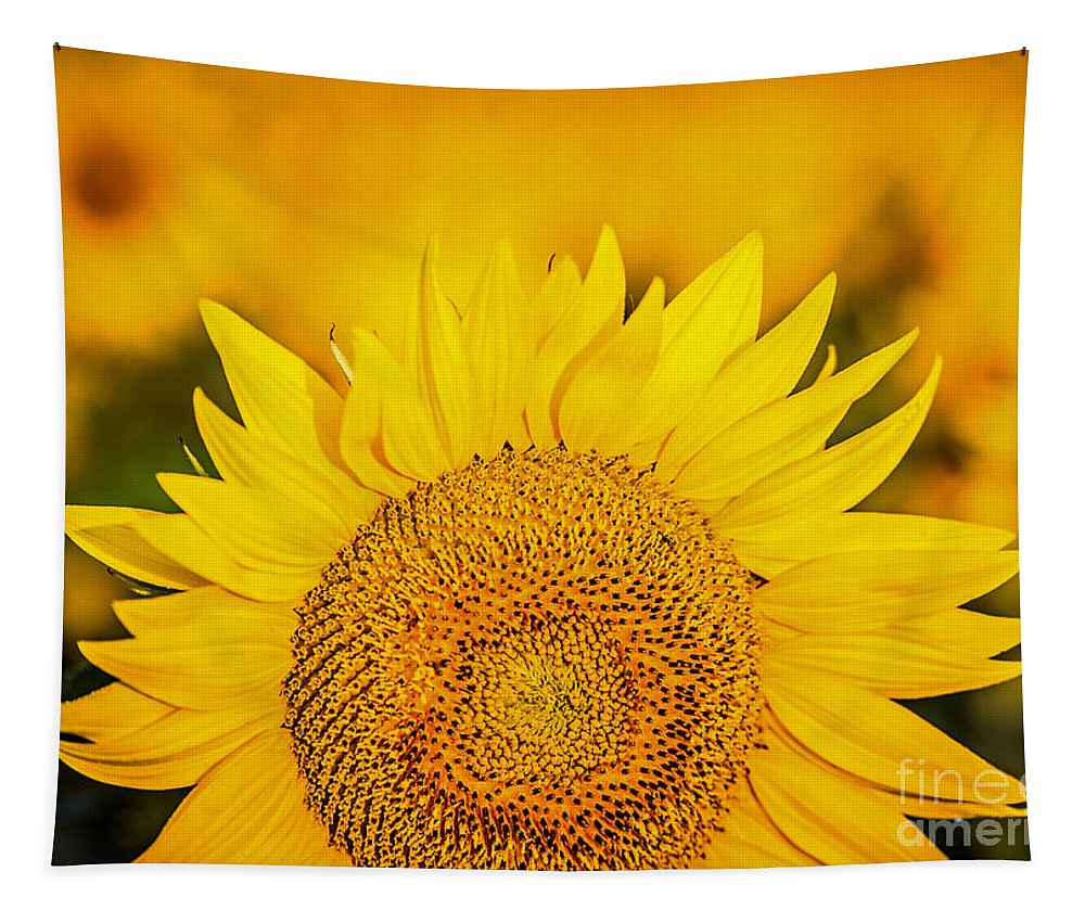 Sunflower Tapestry featuring the photograph Here Comes The Sun by Lynn Sprowl