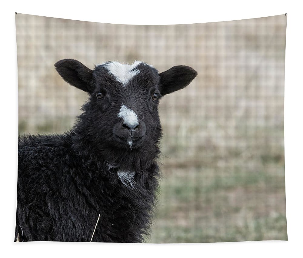 Goat Tapestry featuring the photograph Here's Looking At You Kid by Belinda Greb