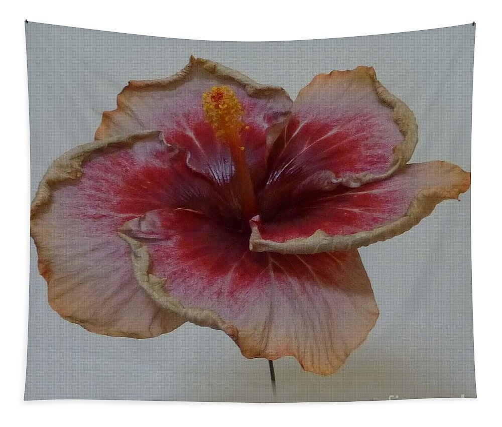 Flower Tapestry featuring the photograph Hibiscus 3 by Barbie Corbett-Newmin
