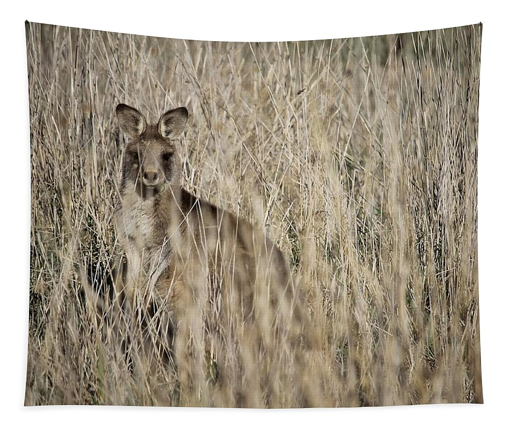 Kangaroo Tapestry featuring the photograph Hiding In Plain Sight by Anthony Croke