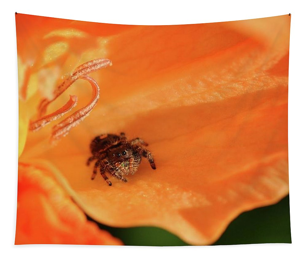 Spider Tapestry featuring the photograph Hiding In Plain Sight by Barbara Treaster