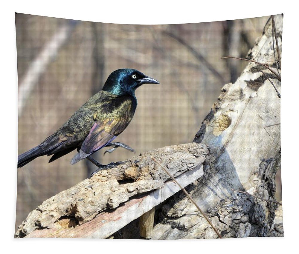 Bird Tapestry featuring the photograph High Steppin' by Bonfire Photography