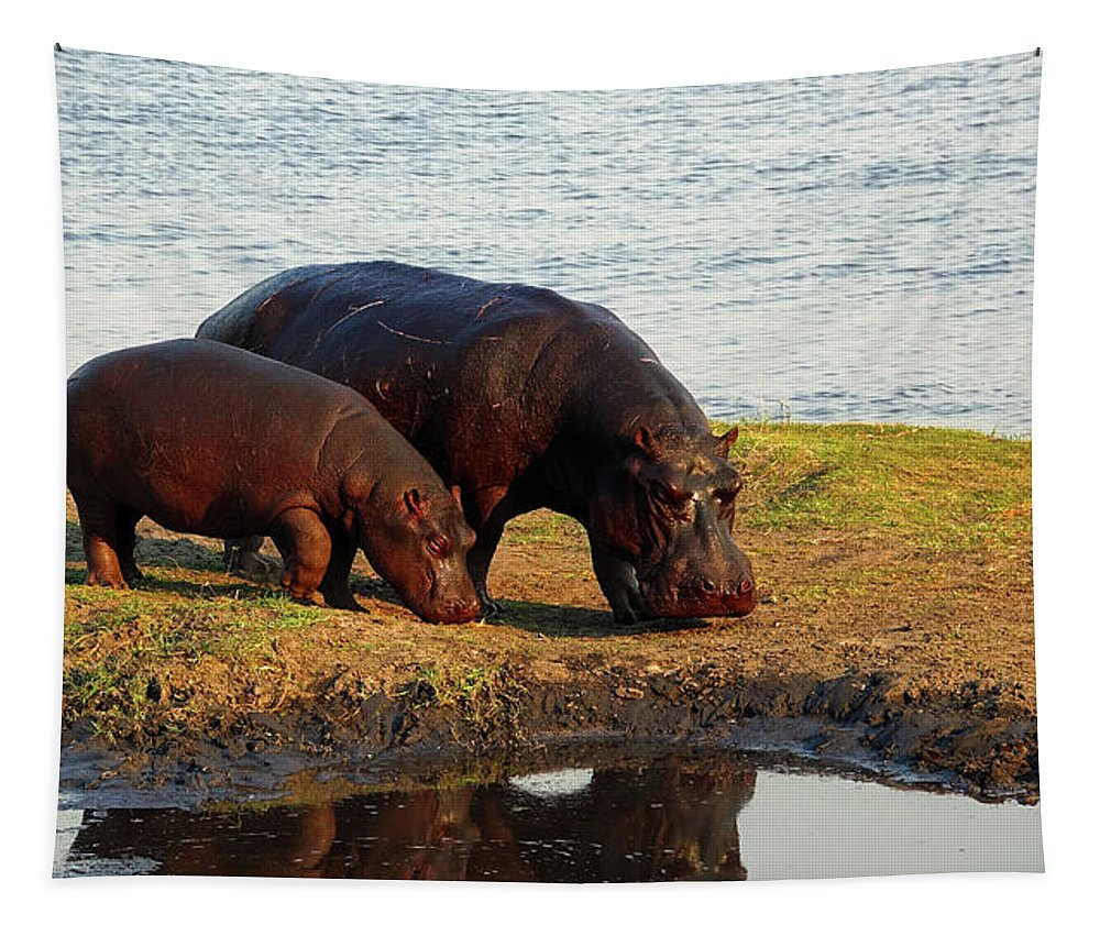 Mother Tapestry featuring the photograph Hippo Mother And Child - Botswana Africa by Pixabay