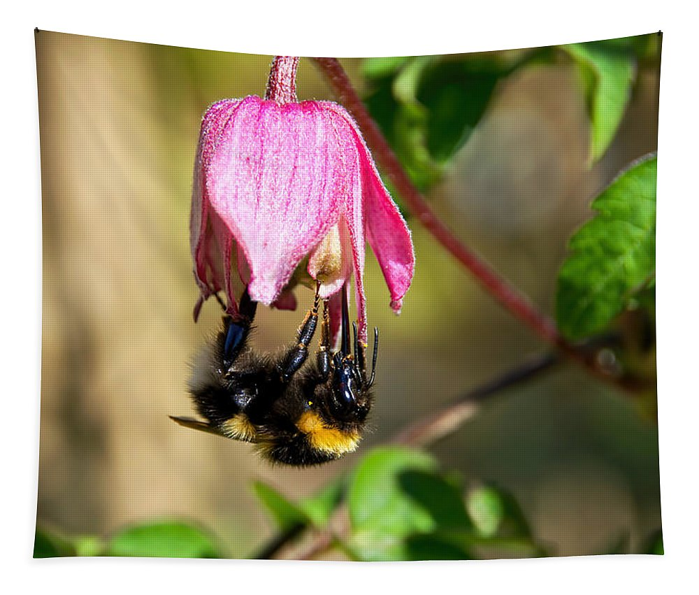 Bumblebee Tapestry featuring the photograph Hold On Tight by Susie Peek