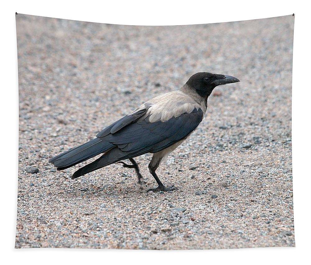 Lehtokukka Tapestry featuring the photograph Hooded Crow by Jouko Lehto