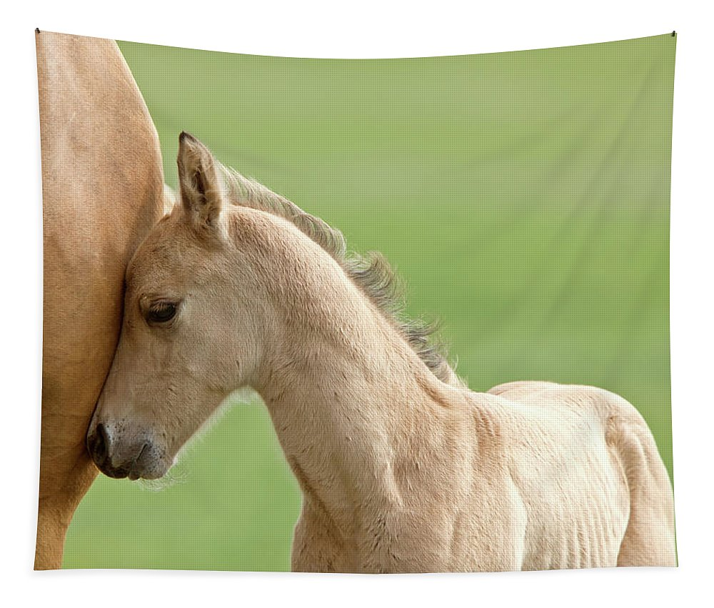 Horse Tapestry featuring the digital art Horse And Colt by Mark Duffy