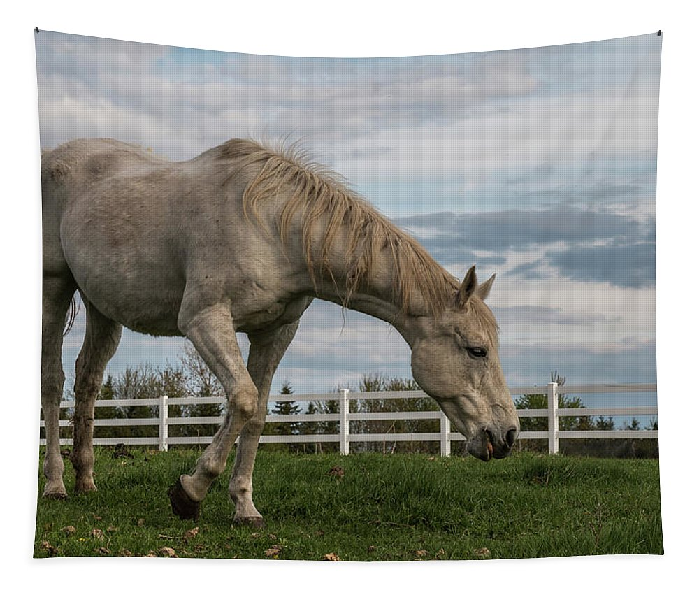 Horse Tapestry featuring the photograph Horses #1 by Patti Deters