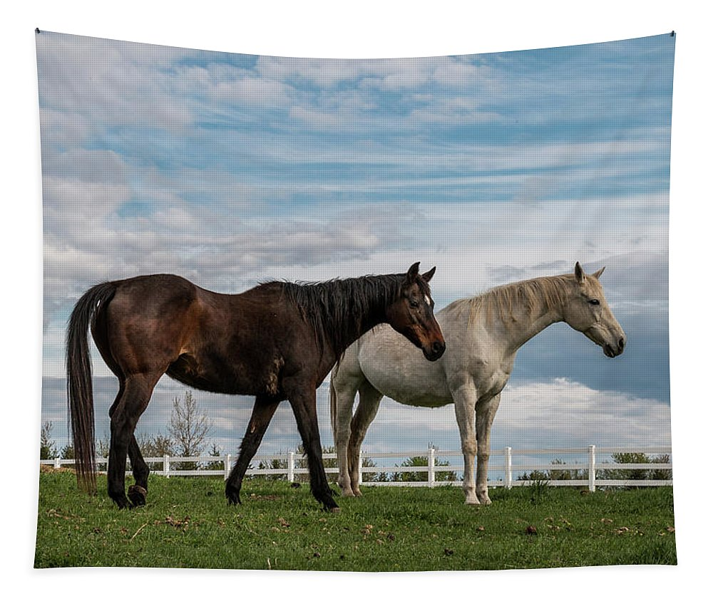 Horse Tapestry featuring the photograph Horses #2 by Patti Deters